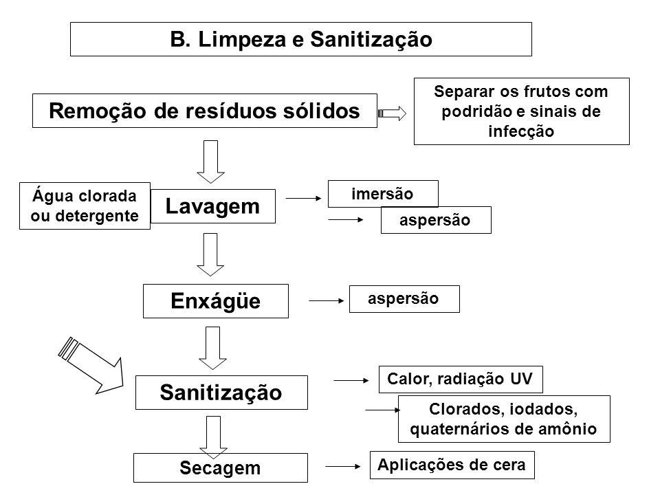 B. Limpeza e Sanitização Remoção de resíduos sólidos Separar os frutos com podridão e sinais de infecção Lavagem imersão aspersão Água clorada ou dete