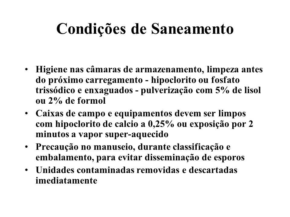 Condições de Saneamento Higiene nas câmaras de armazenamento, limpeza antes do próximo carregamento - hipoclorito ou fosfato trissódico e enxaguados -