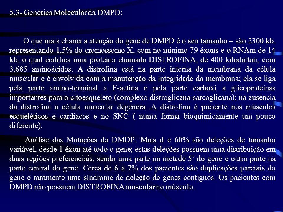 5.3- Genética Molecular da DMPD: O que mais chama a atenção do gene de DMPD é o seu tamanho – são 2300 kb, representando 1,5% do cromossomo X, com no