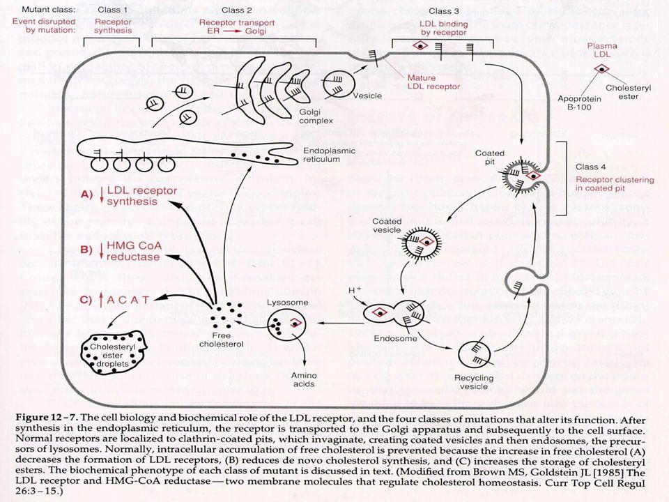 6.3- Genética Molecular: O gene foi mapeado no cromosssomo 19, possui 45 kb e consiste de 18 éxons e 17 introns, que codifica um RNAm de 5,3 kb e uma proteína de 839 aminoácidos.