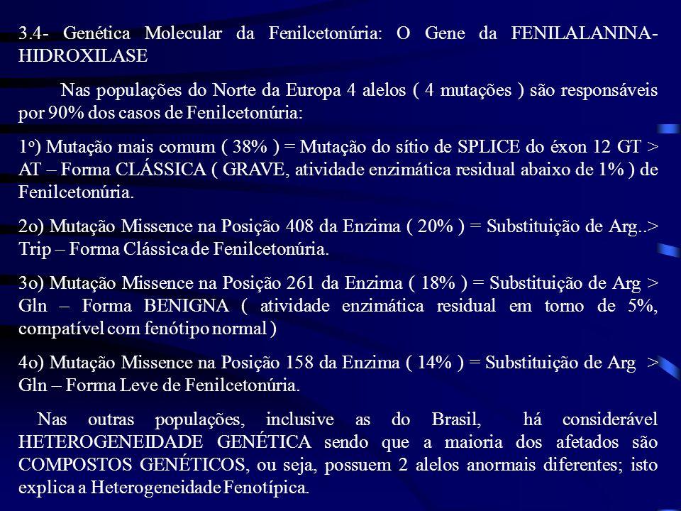 3.4- Genética Molecular da Fenilcetonúria: O Gene da FENILALANINA- HIDROXILASE Nas populações do Norte da Europa 4 alelos ( 4 mutações ) são responsáv