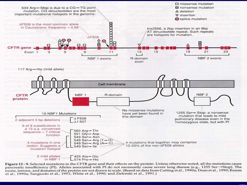 4.3- Genética Molecular da Fibrose Cística: O gene CF foi mapeado na região 7q31 e clonado; é um gene grande com 250 kb e 27 éxons.