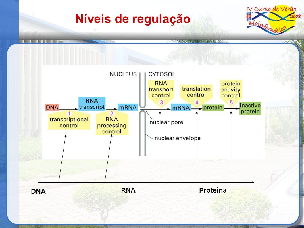 DNA RNAProteína Níveis de regulação