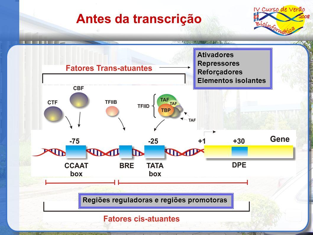 Antes da transcrição Ativadores Repressores Reforçadores Elementos isolantes Regiões reguladoras e regiões promotoras