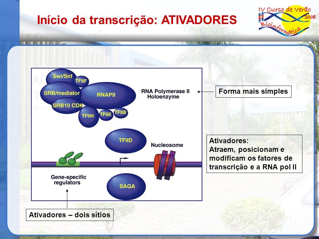 Ativadores – dois sítios Forma mais simples Ativadores: Atraem, posicionam e modificam os fatores de transcrição e a RNA pol II Início da transcrição: