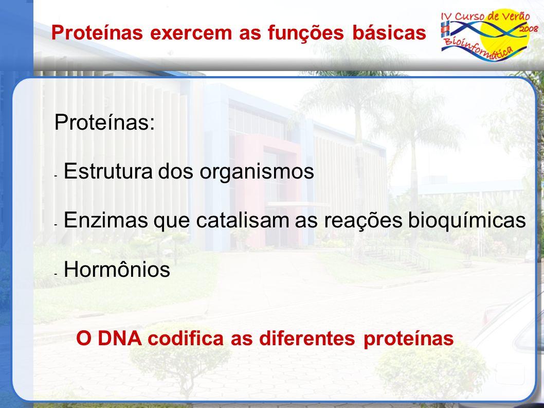 Proteínas exercem as funções básicas Proteínas: - Estrutura dos organismos - Enzimas que catalisam as reações bioquímicas - Hormônios O DNA codifica a
