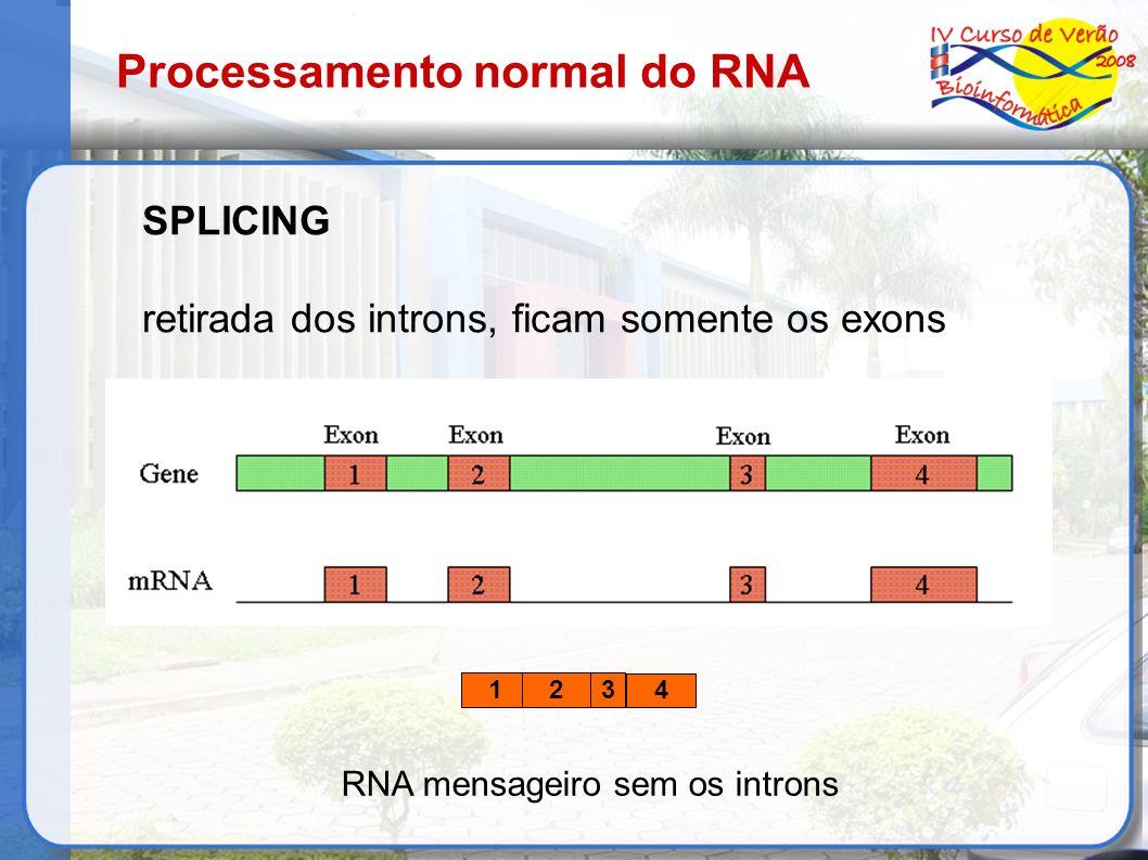 SPLICING retirada dos introns, ficam somente os exons RNA mensageiro sem os introns 123 4 Processamento normal do RNA