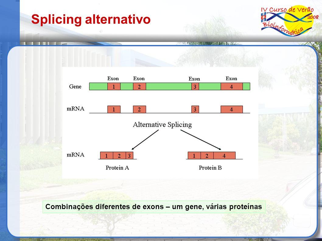 Splicing alternativo Combinações diferentes de exons – um gene, várias proteínas