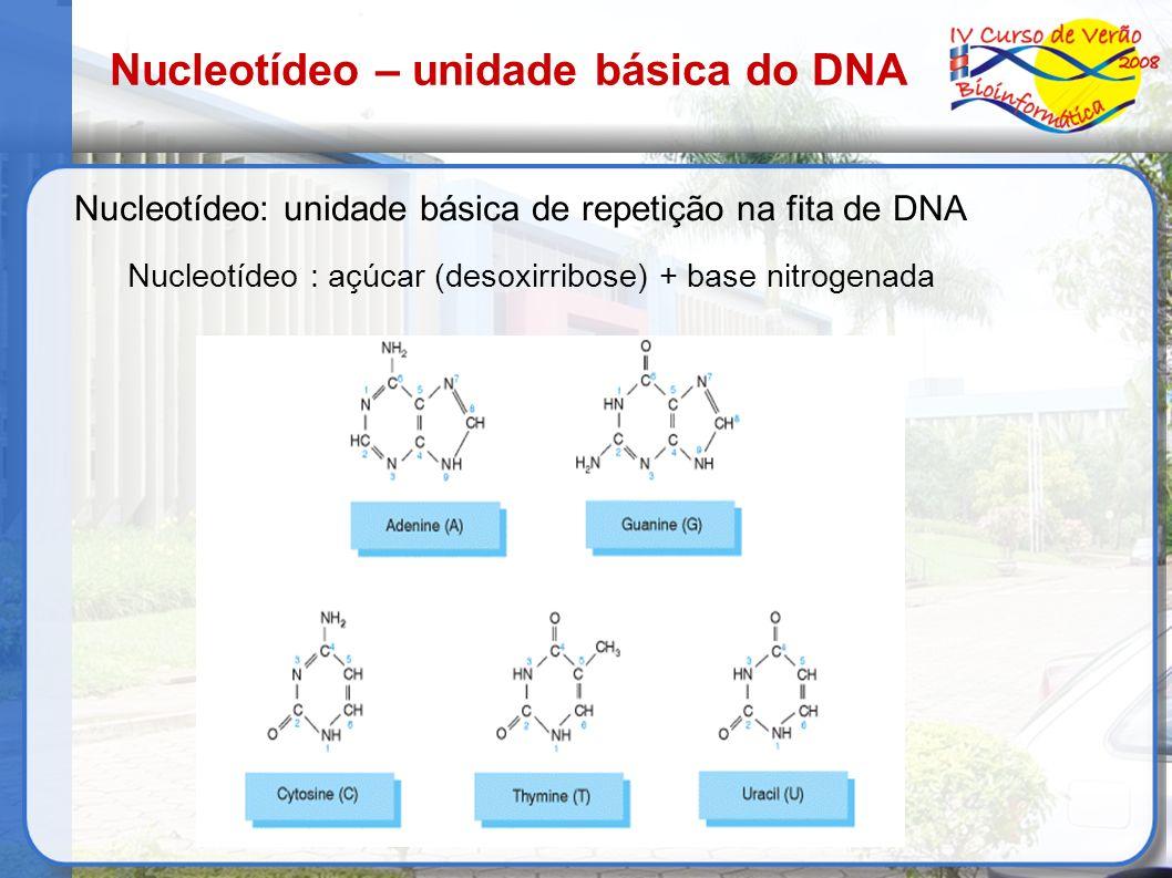 Estrutura do DNA Os nucleotídeos se ligam uns aos outros – ligação fosfodiéster Estrutura do DNA : hélice dupla antiparalela