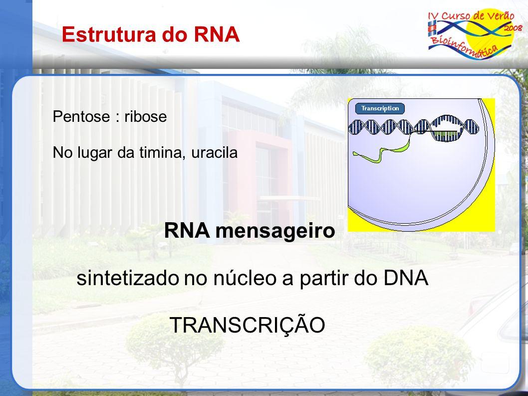 Estrutura do RNA Pentose : ribose No lugar da timina, uracila RNA mensageiro sintetizado no núcleo a partir do DNA TRANSCRIÇÃO