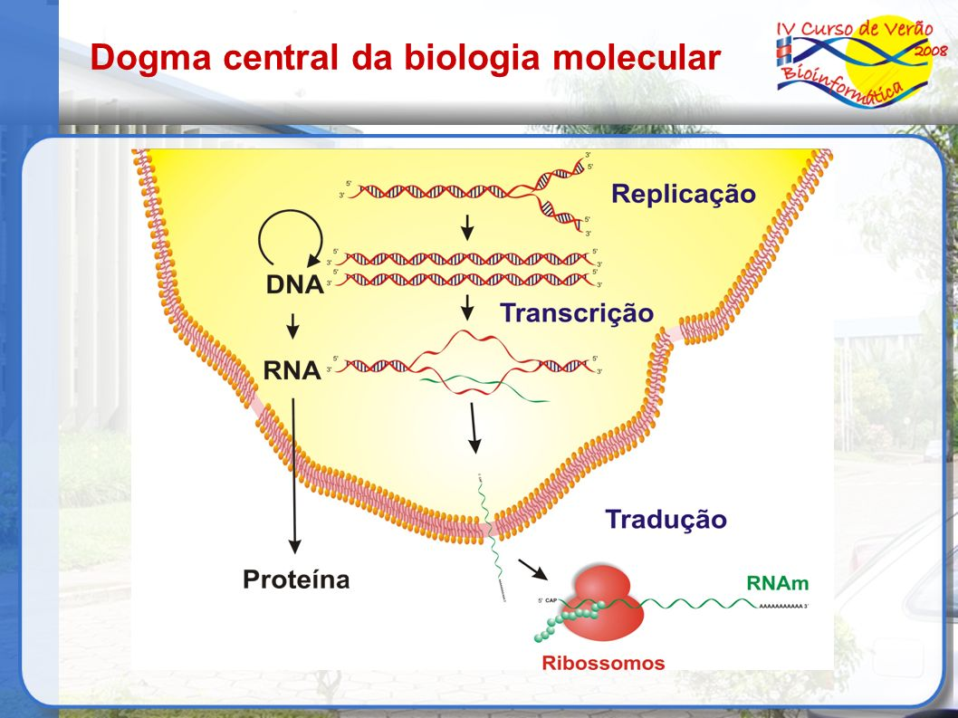 Mecanismos para a criação de células especializadas As diferenças dramáticas que existem entre os diferentes tipos celulares é produzida por diferenças na expressão gênica