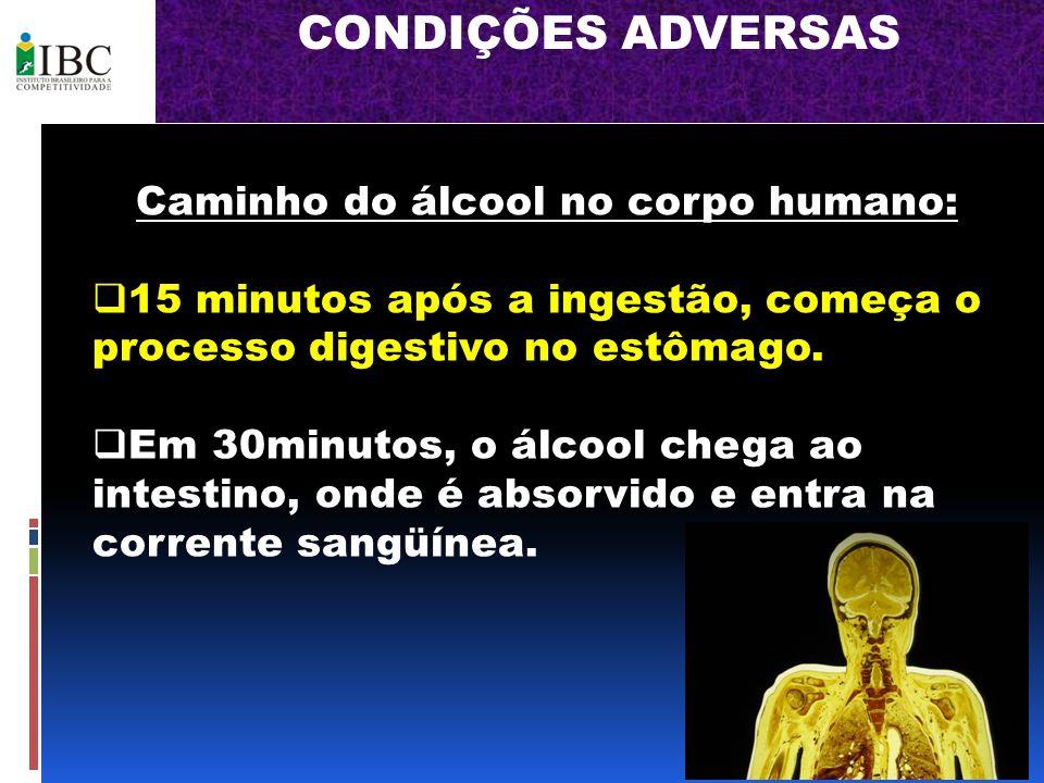 Caminho do álcool no corpo humano: 15 minutos após a ingestão, começa o processo digestivo no estômago. Em 30minutos, o álcool chega ao intestino, ond