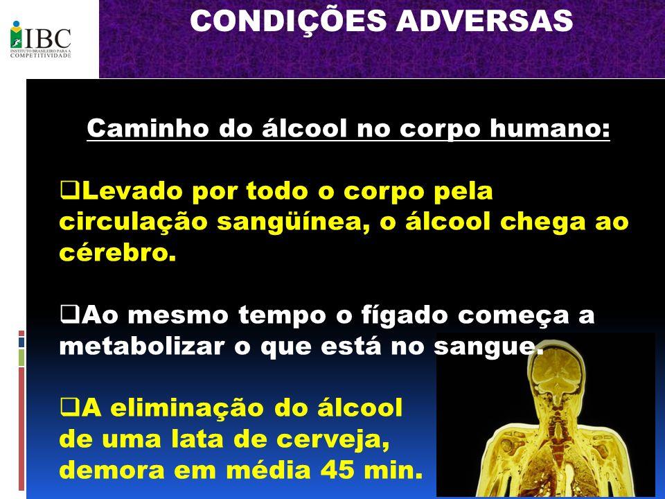 Caminho do álcool no corpo humano: Levado por todo o corpo pela circulação sangüínea, o álcool chega ao cérebro. Ao mesmo tempo o fígado começa a meta