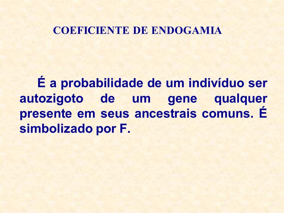 COEFICIENTE DE ENDOGAMIA É a probabilidade de um indivíduo ser autozigoto de um gene qualquer presente em seus ancestrais comuns. É simbolizado por F.