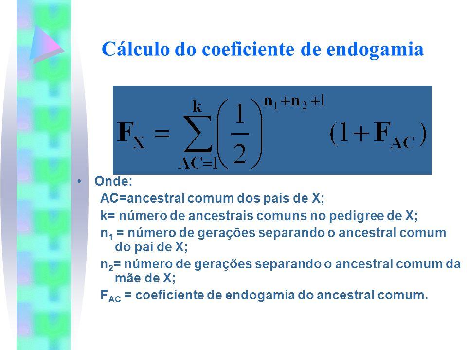 Cálculo do coeficiente de endogamia Onde: AC=ancestral comum dos pais de X; k= número de ancestrais comuns no pedigree de X; n 1 = número de gerações