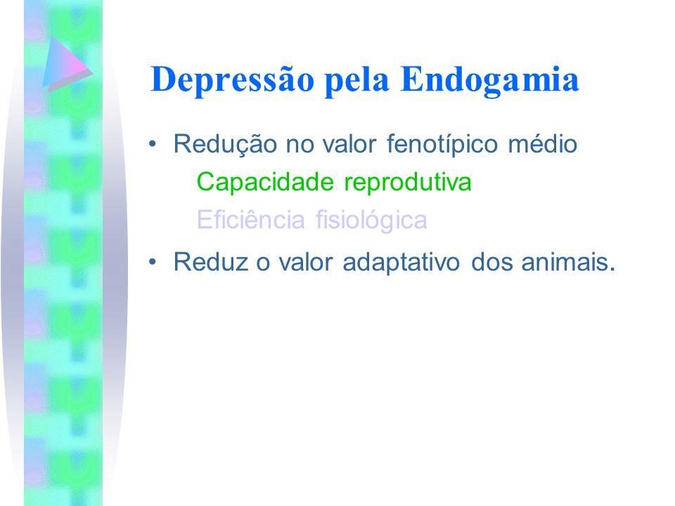 Depressão pela Endogamia Redução no valor fenotípico médio Capacidade reprodutiva Eficiência fisiológica Reduz o valor adaptativo dos animais.