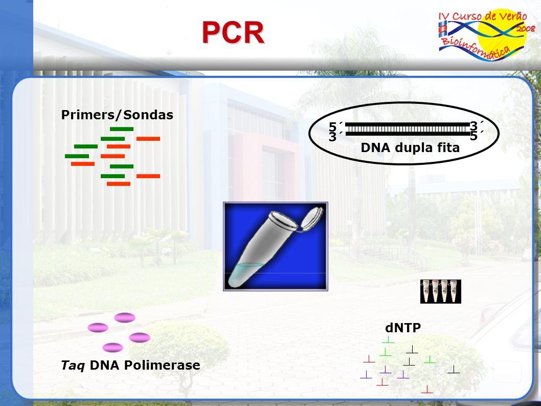 Primers/Sondas 3´ 5´ DNA dupla fita 5´ 3´ dNTP Taq DNA Polimerase PCR