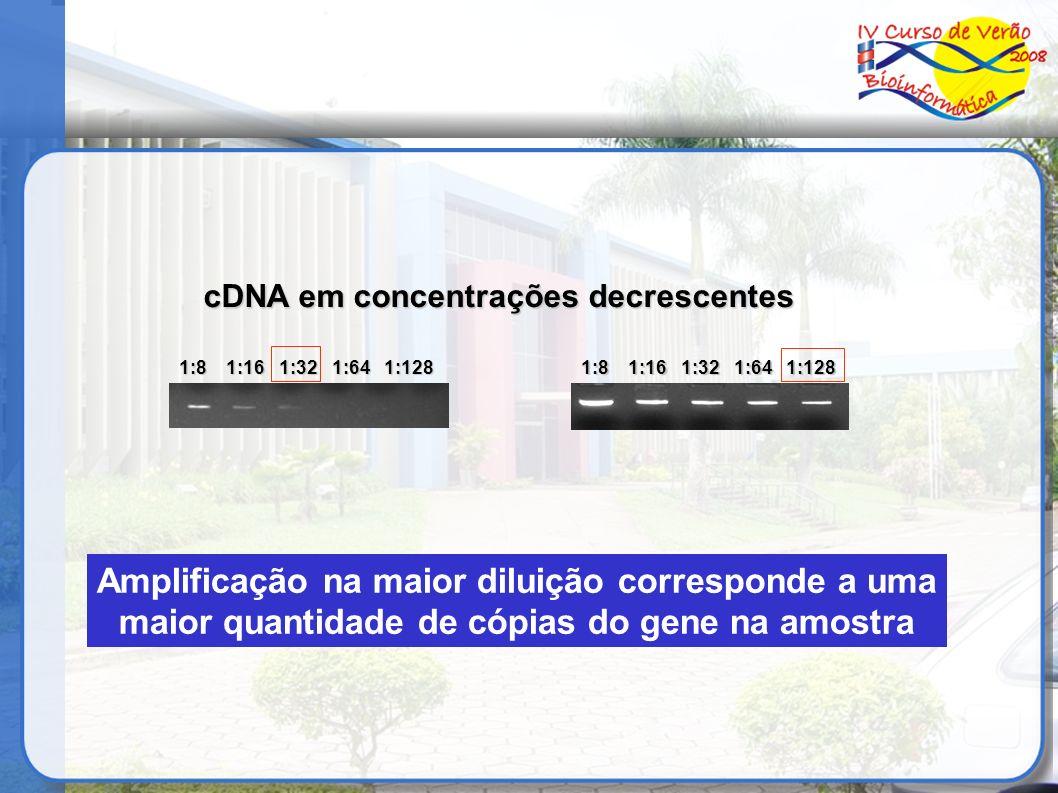cDNA em concentrações decrescentes 1:8 1:16 1:32 1:64 1:128 Amplificação na maior diluição corresponde a uma maior quantidade de cópias do gene na amo