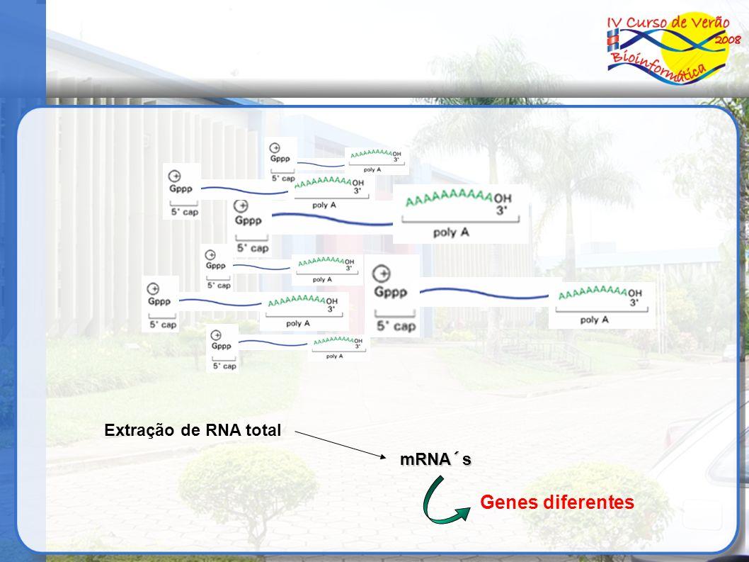 Extração de RNA total mRNA´s Genes diferentes
