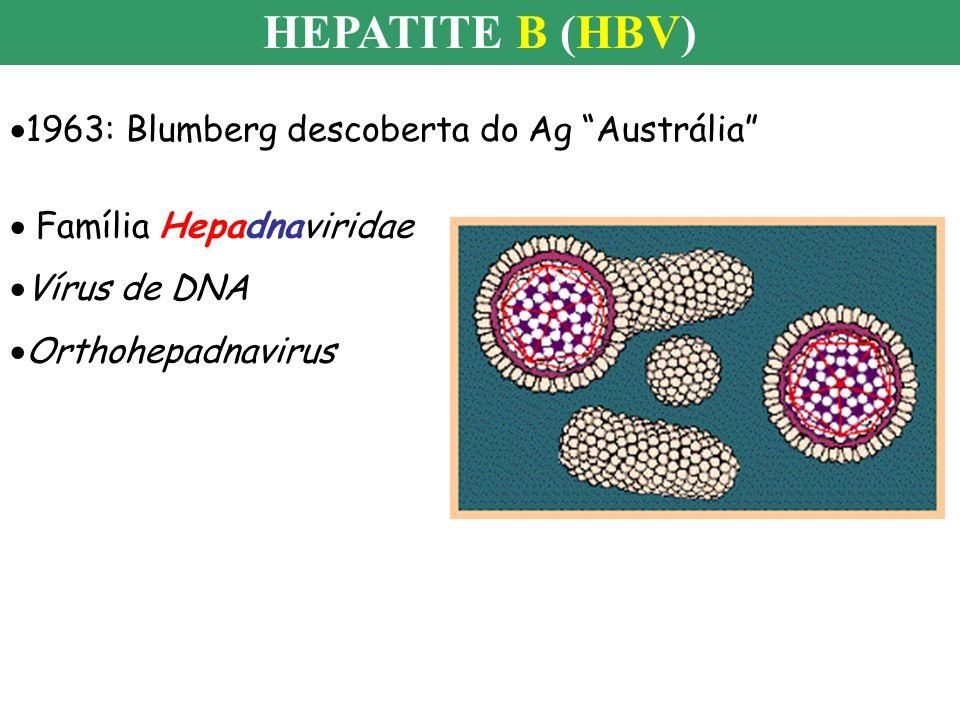HEPATITE B (HBV) 1963: Blumberg descoberta do Ag Austrália Família Hepadnaviridae Vírus de DNA Orthohepadnavirus