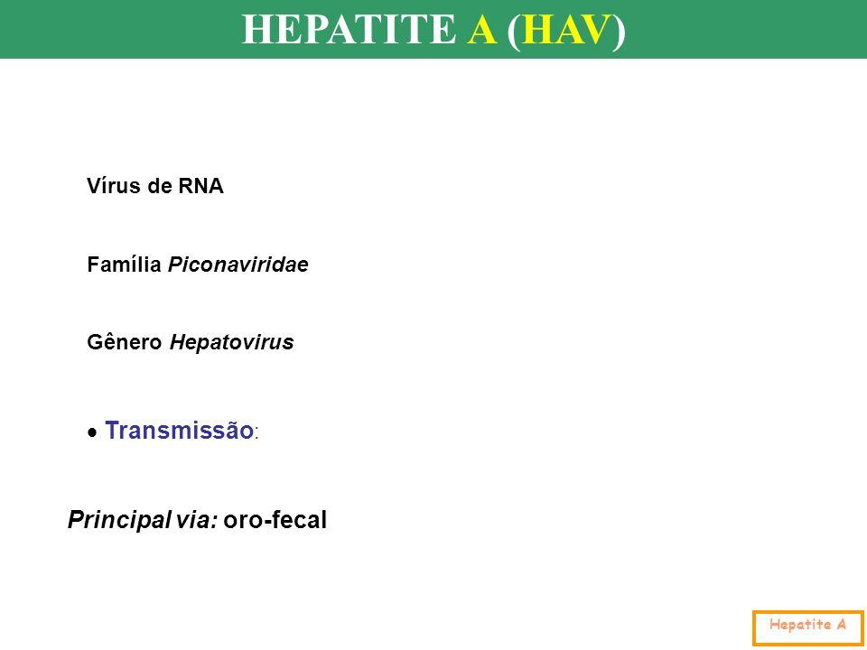 HEPATITE A (HAV) Hepatite A Vírus de RNA Família Piconaviridae Gênero Hepatovirus Principal via: oro-fecal Transmissão :