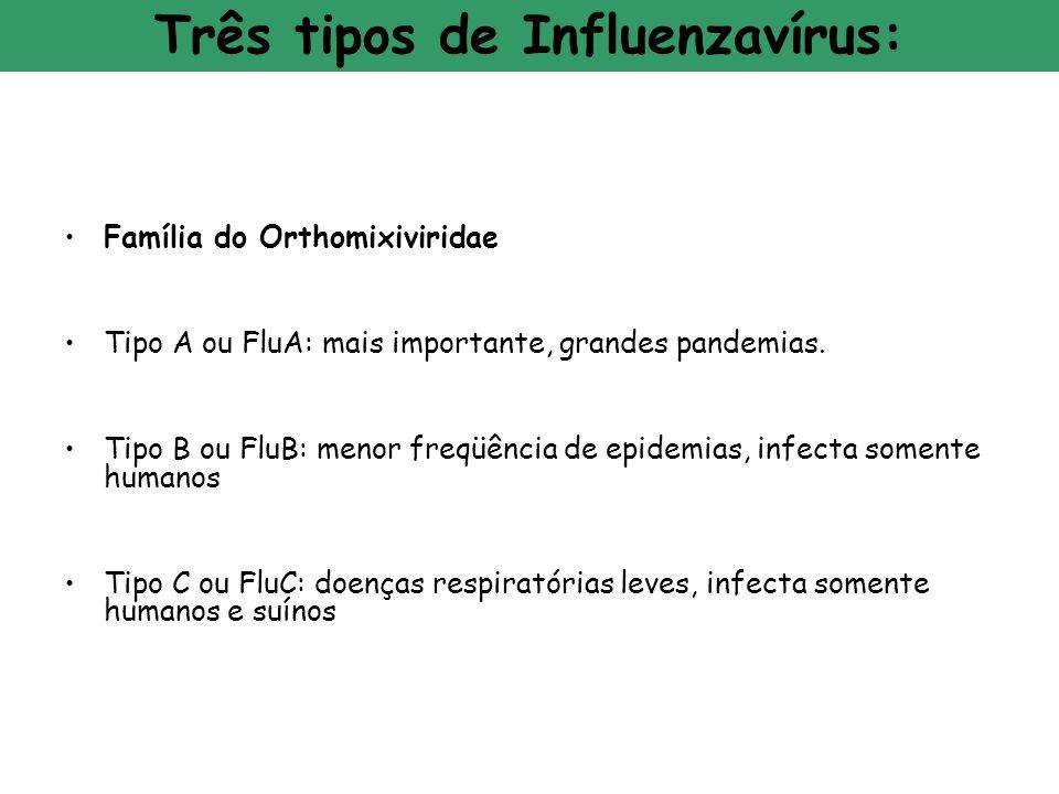 Família do Orthomixiviridae Tipo A ou FluA: mais importante, grandes pandemias. Tipo B ou FluB: menor freqüência de epidemias, infecta somente humanos