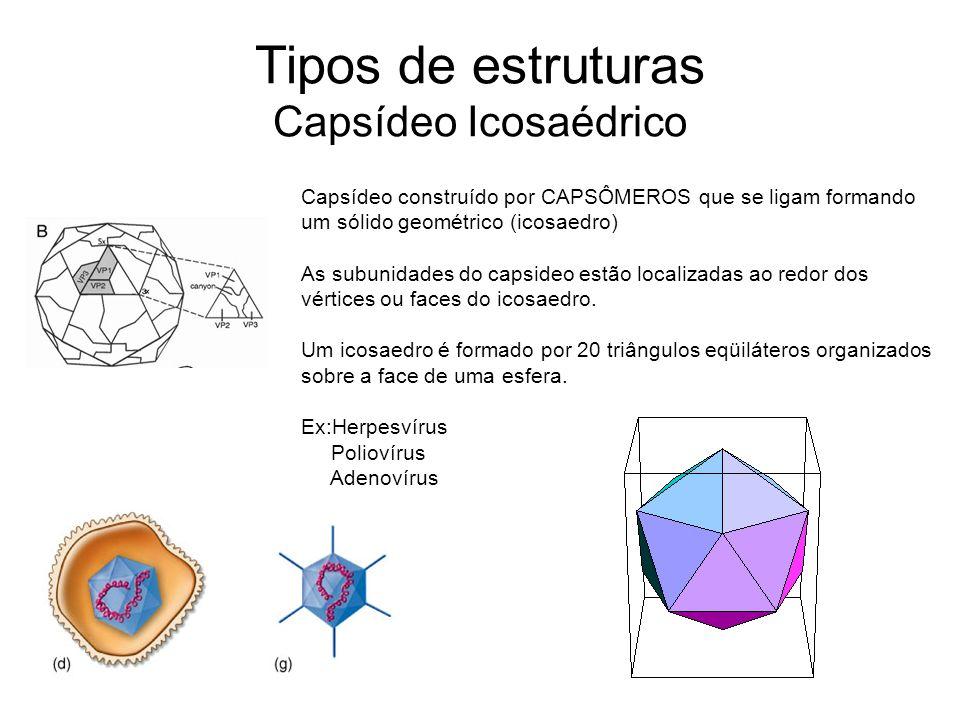Tipos de estruturas Capsídeo Icosaédrico Capsídeo construído por CAPSÔMEROS que se ligam formando um sólido geométrico (icosaedro) As subunidades do c