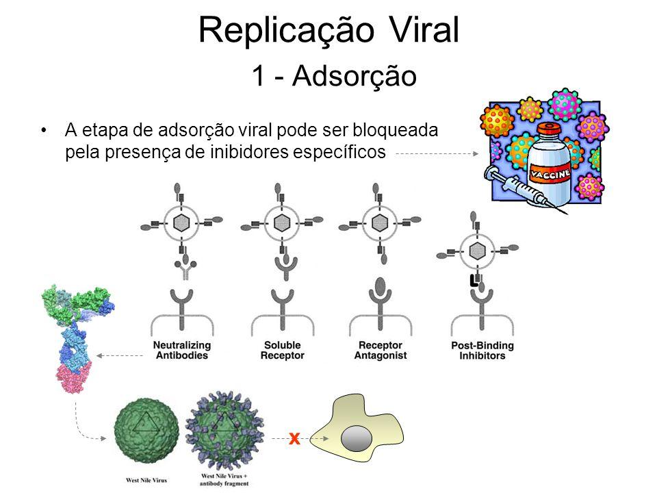 A etapa de adsorção viral pode ser bloqueada pela presença de inibidores específicos x Replicação Viral 1 - Adsorção
