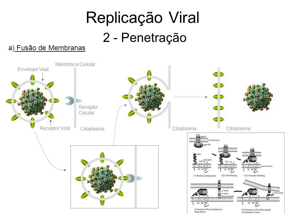 Replicação Viral 2 - Penetração Envelope Viral Receptor Viral Membrana Celular Citoplasma a) Fusão de Membranas Receptor Celular Citoplasma