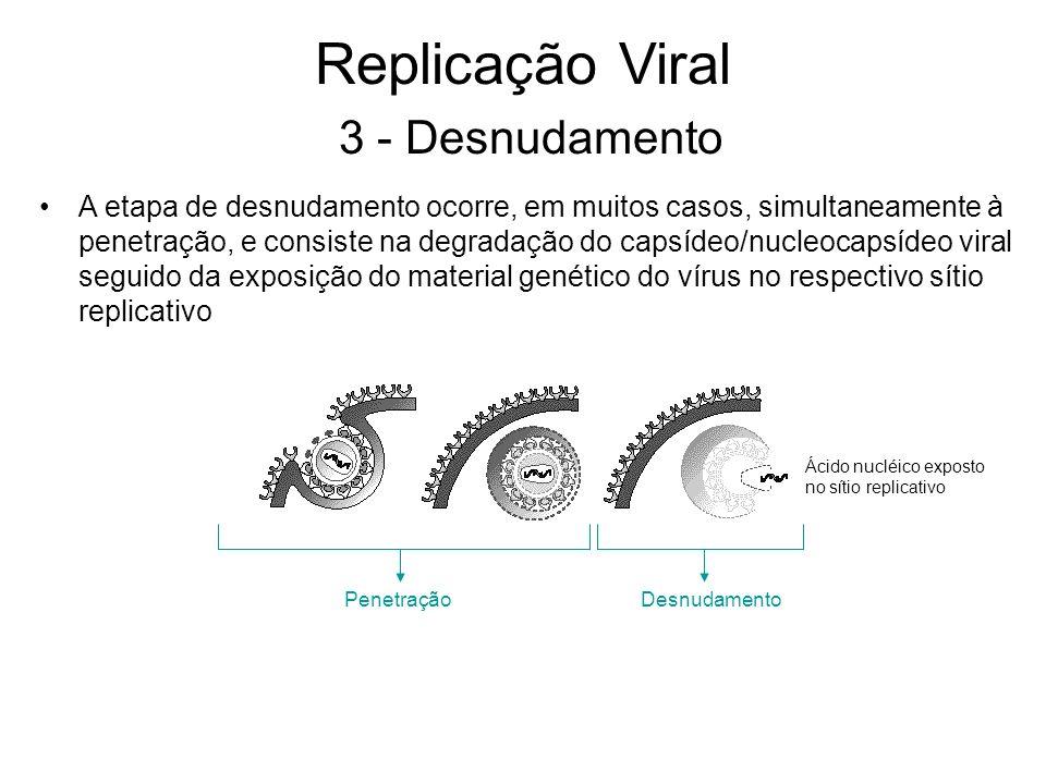 A etapa de desnudamento ocorre, em muitos casos, simultaneamente à penetração, e consiste na degradação do capsídeo/nucleocapsídeo viral seguido da ex