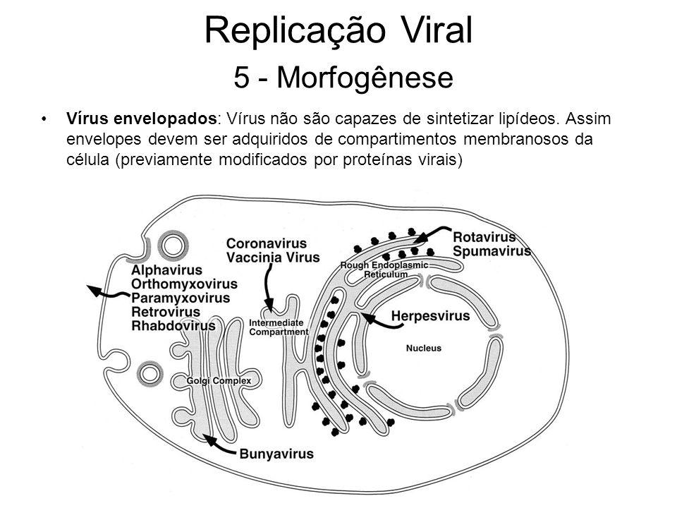 Vírus envelopados: Vírus não são capazes de sintetizar lipídeos. Assim envelopes devem ser adquiridos de compartimentos membranosos da célula (previam