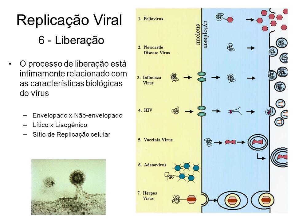 O processo de liberação está intimamente relacionado com as características biológicas do vírus –Envelopado x Não-envelopado –Lítico x Lisogênico –Sít