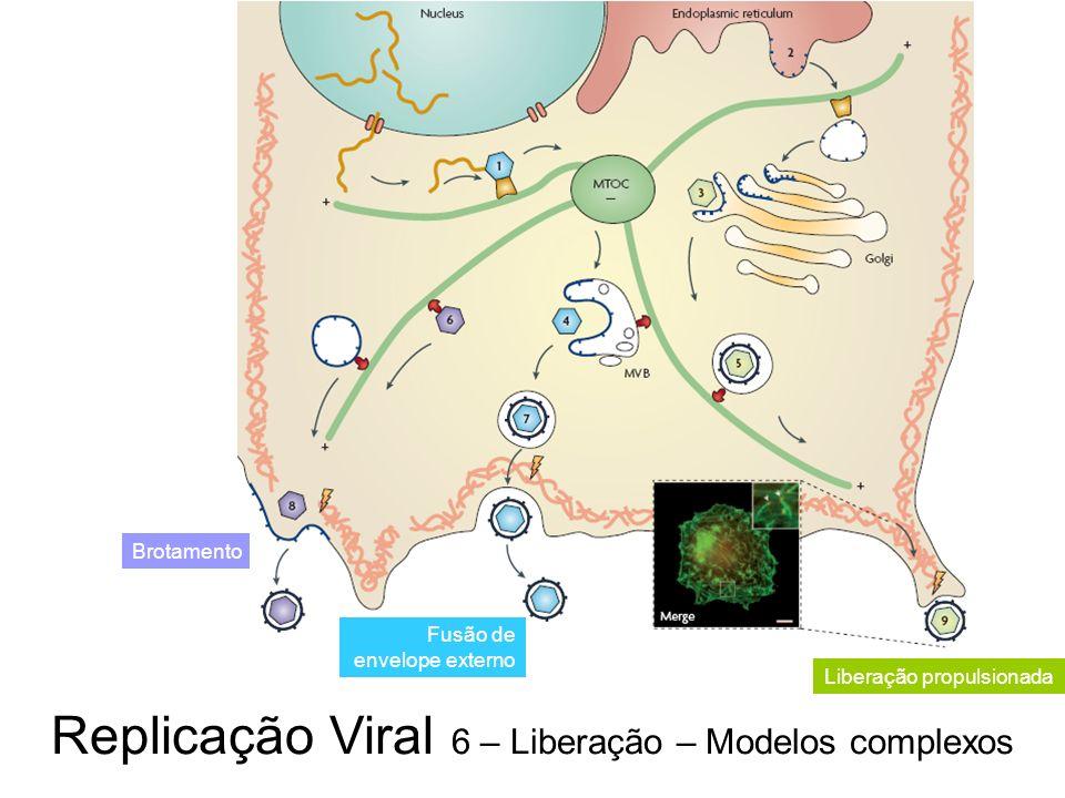 Replicação Viral 6 – Liberação – Modelos complexos Brotamento Fusão de envelope externo Liberação propulsionada