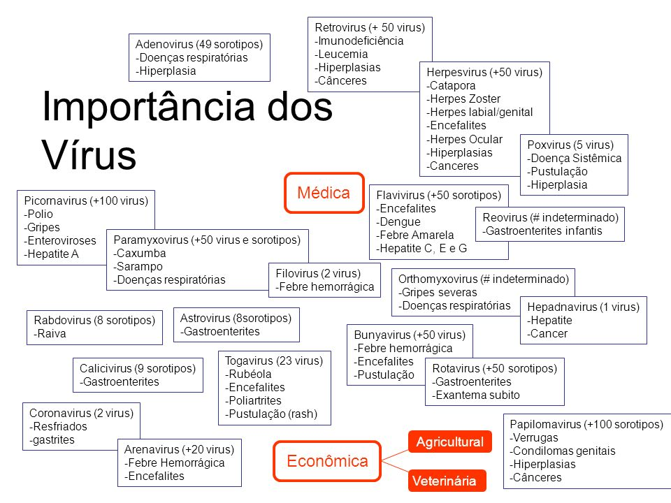 Importância dos Vírus Médica Econômica Veterinária Agricultural Picornavirus (+100 virus) -Polio -Gripes -Enteroviroses -Hepatite A Calicivirus (9 sor