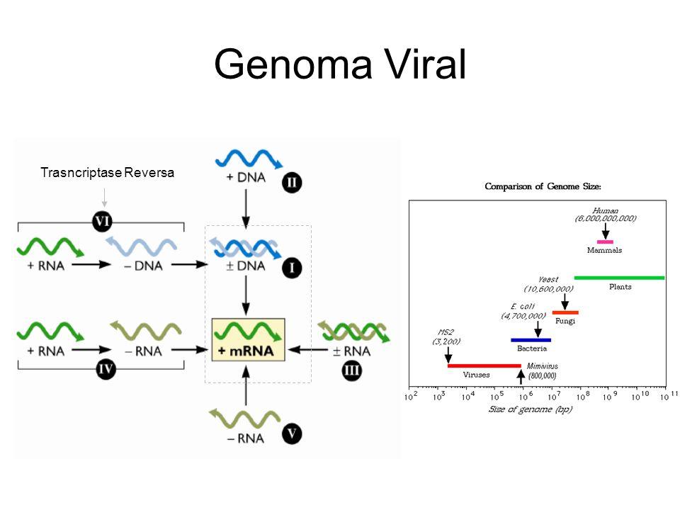 Genoma Viral Trasncriptase Reversa