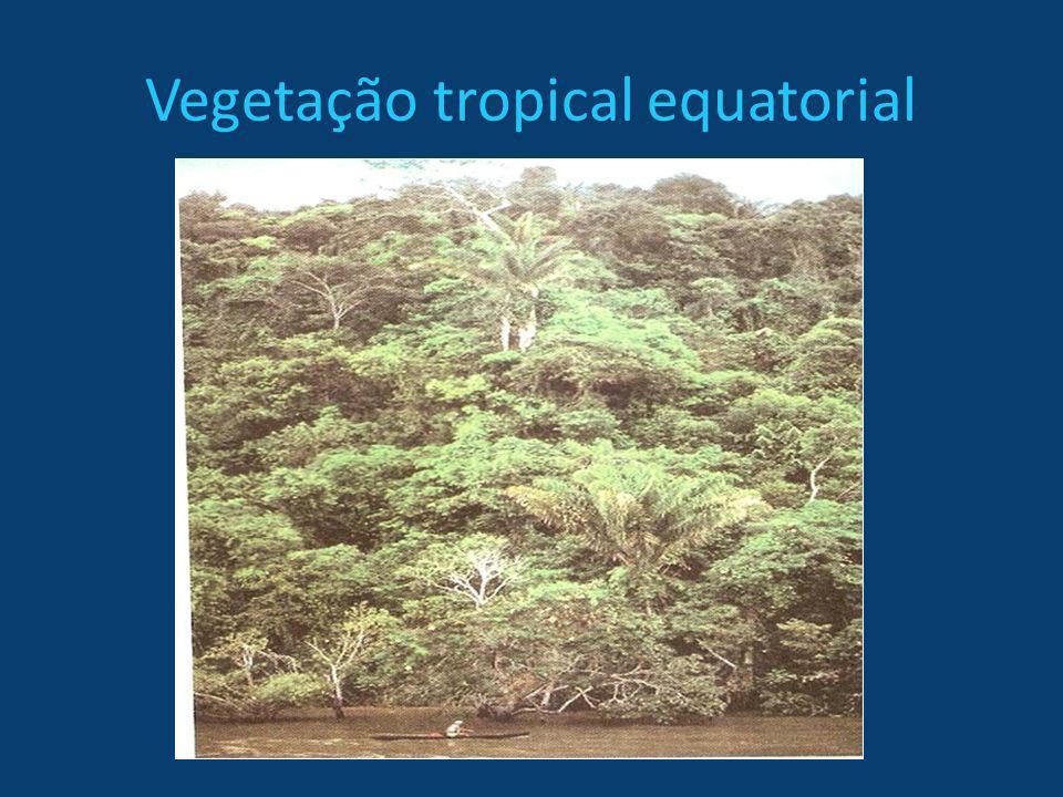Vegetação tropical equatorial