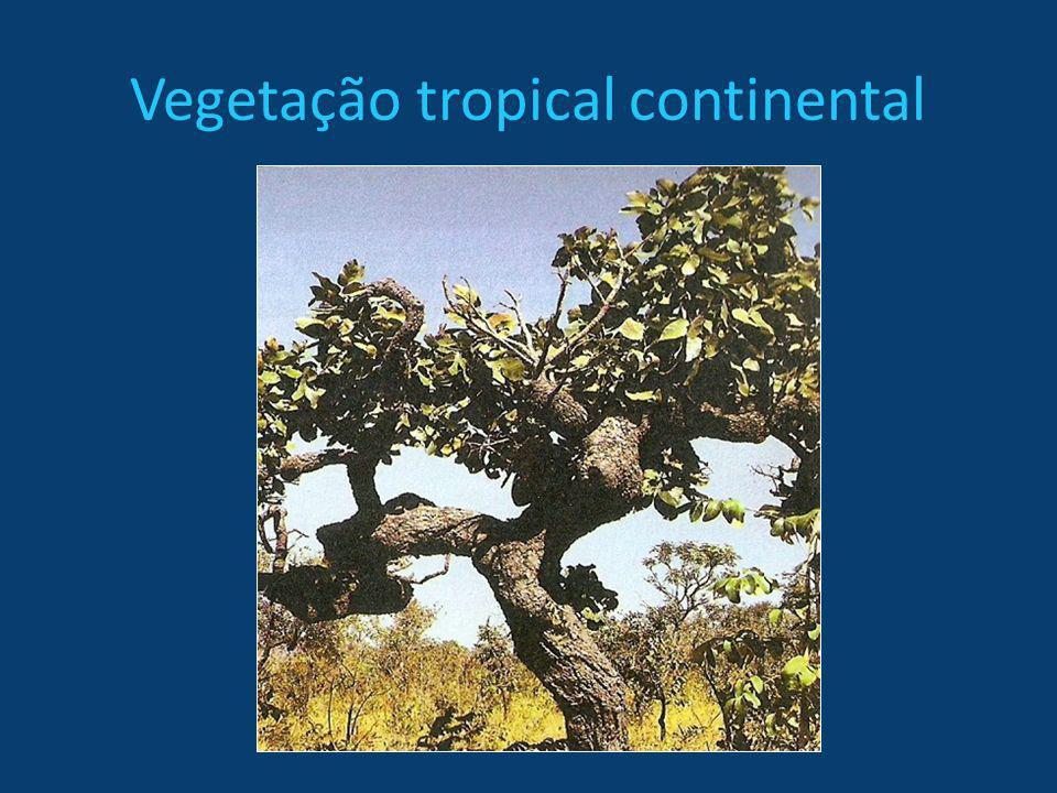 Vegetação tropical continental