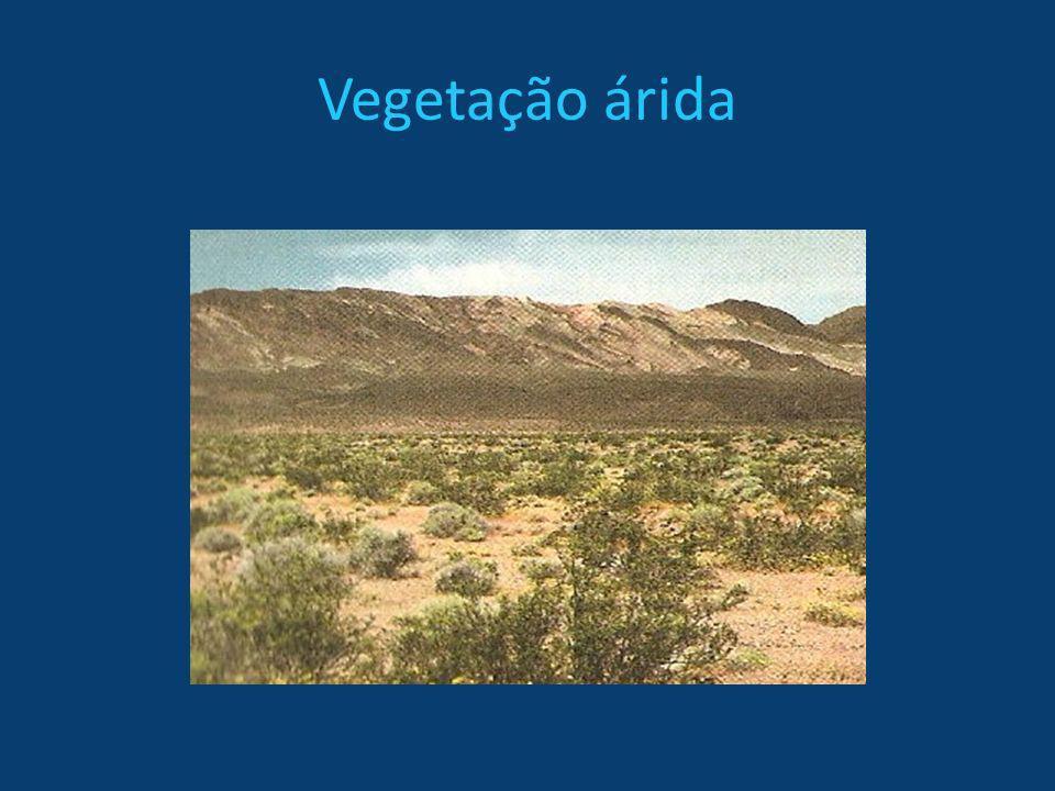 Vegetação árida