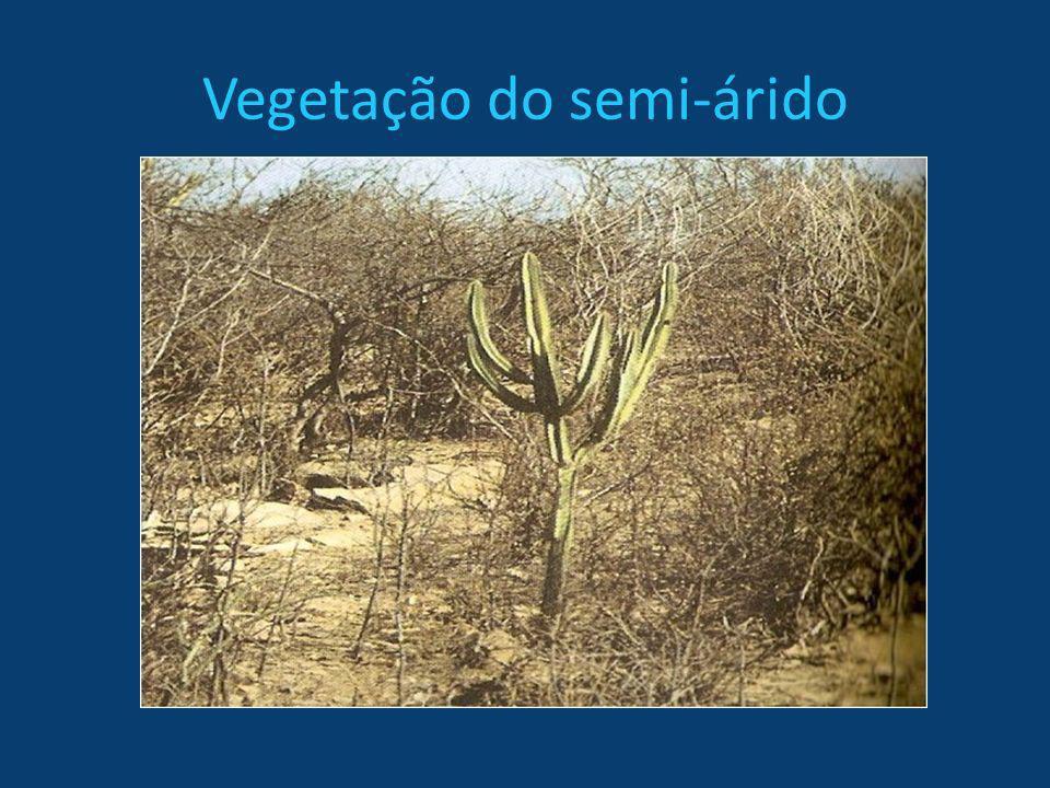 Vegetação do semi-árido