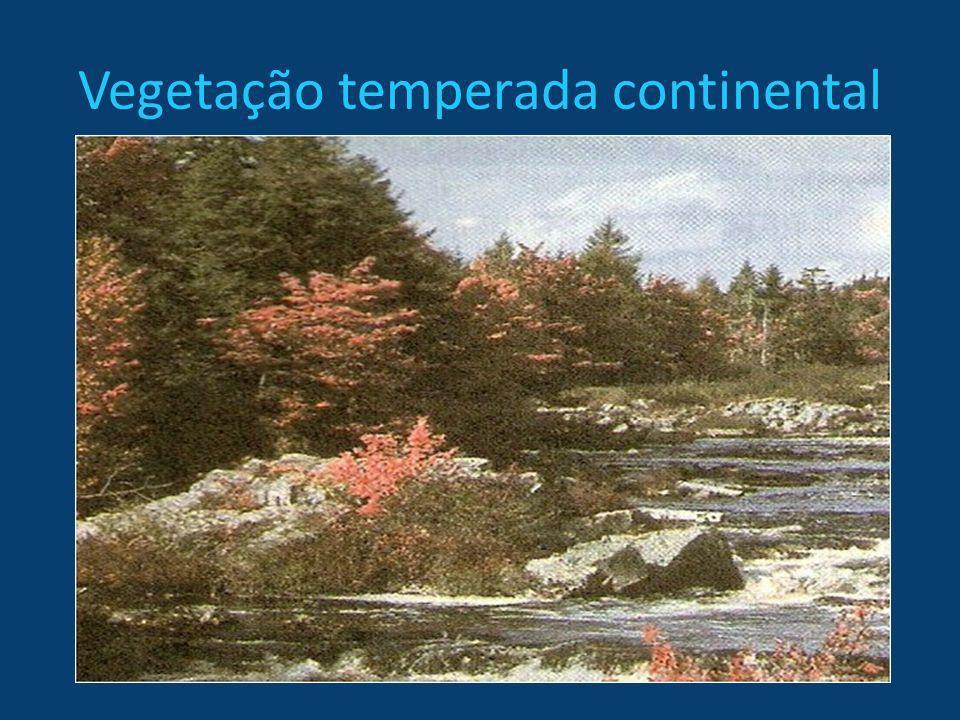 Vegetação temperada continental