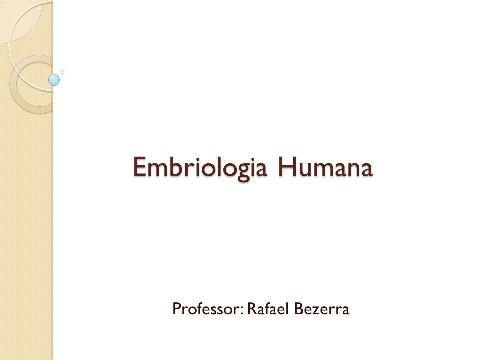 Embriologia Humana Professor: Rafael Bezerra