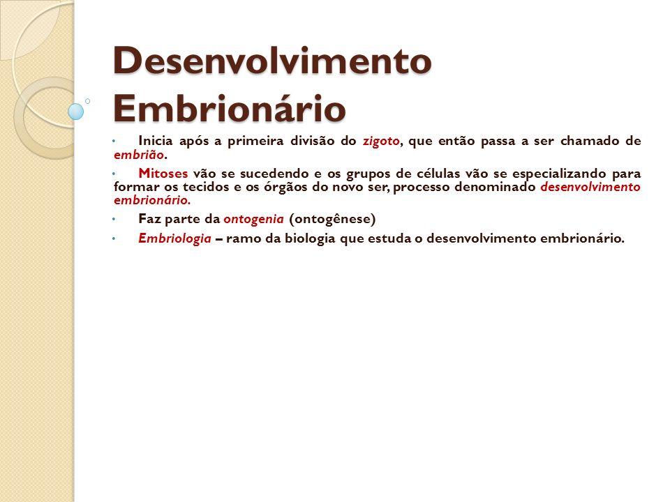 Desenvolvimento Embrionário Inicia após a primeira divisão do zigoto, que então passa a ser chamado de embrião. Mitoses vão se sucedendo e os grupos d