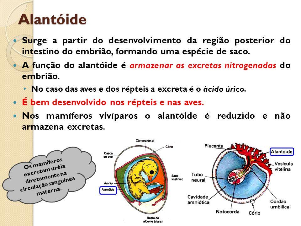 Alantóide Surge a partir do desenvolvimento da região posterior do intestino do embrião, formando uma espécie de saco. A função do alantóide é armazen