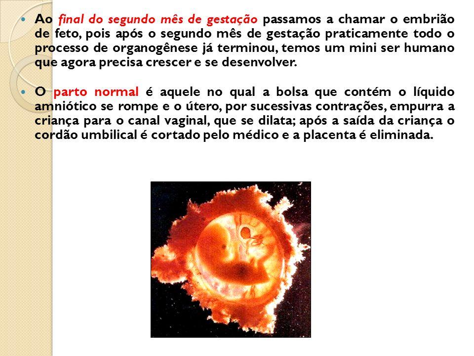 Ao final do segundo mês de gestação passamos a chamar o embrião de feto, pois após o segundo mês de gestação praticamente todo o processo de organogên