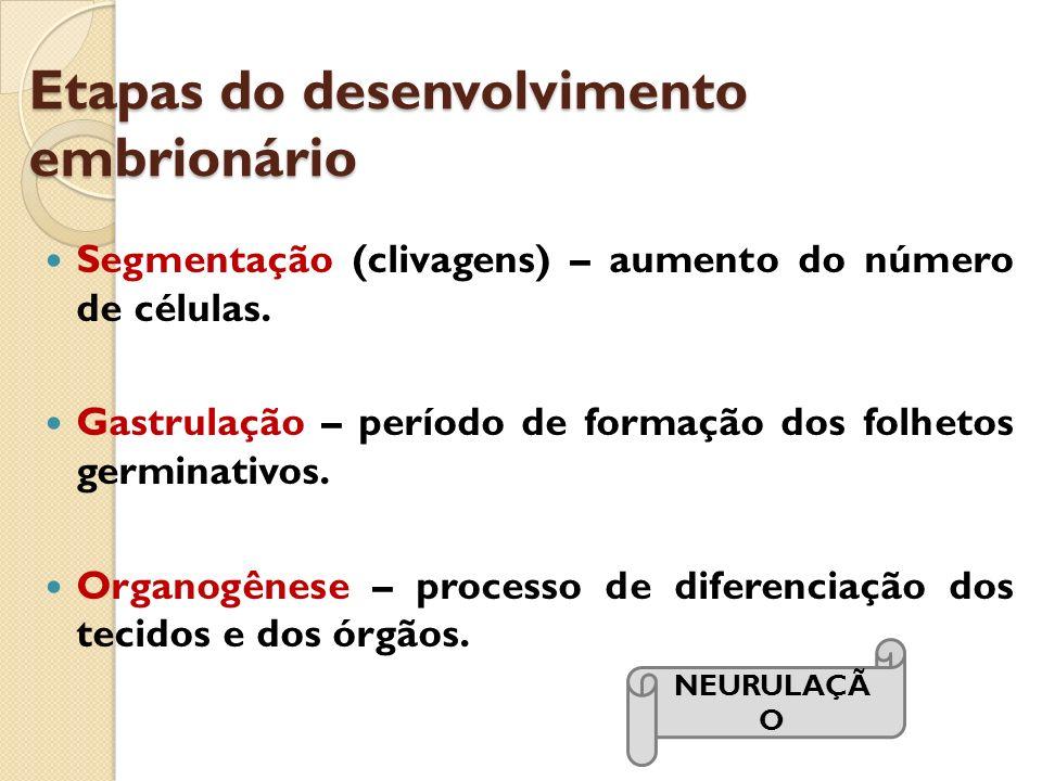 Etapas do desenvolvimento embrionário Segmentação (clivagens) – aumento do número de células. Gastrulação – período de formação dos folhetos germinati