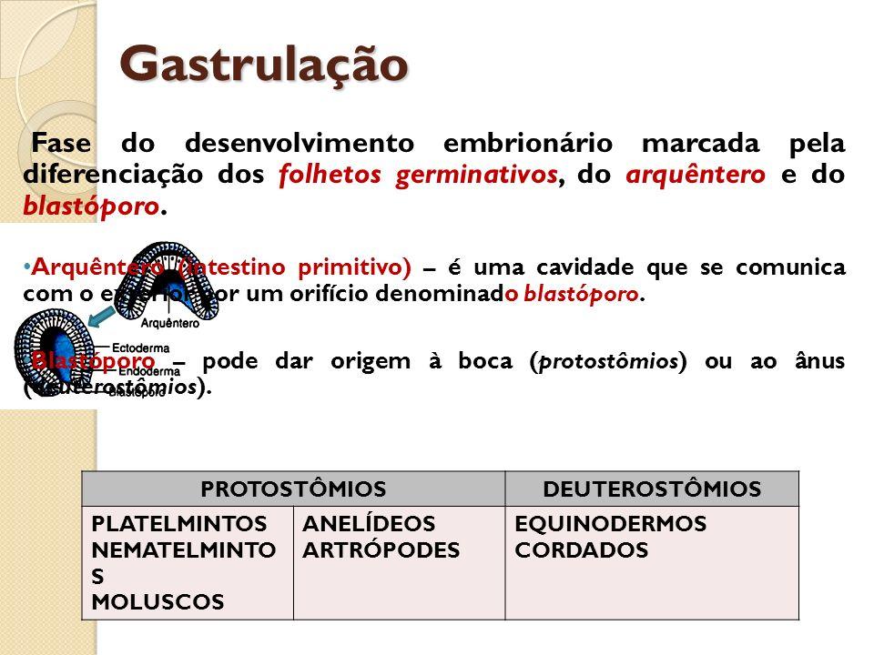 Gastrulação Fase do desenvolvimento embrionário marcada pela diferenciação dos folhetos germinativos, do arquêntero e do blastóporo. Arquêntero (intes
