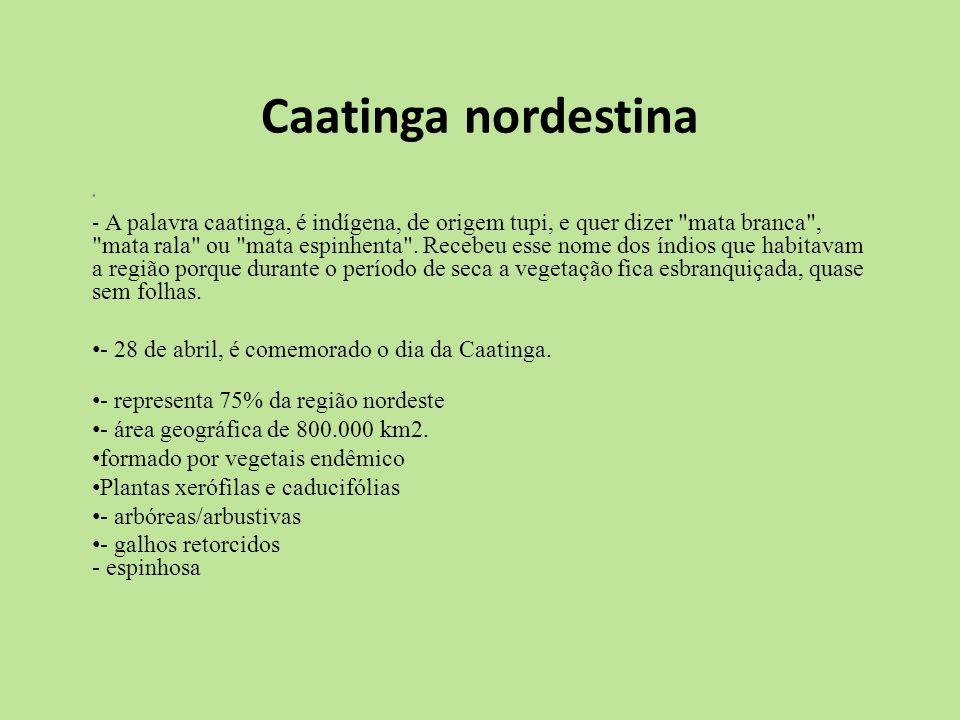 Caatinga nordestina - A palavra caatinga, é indígena, de origem tupi, e quer dizer