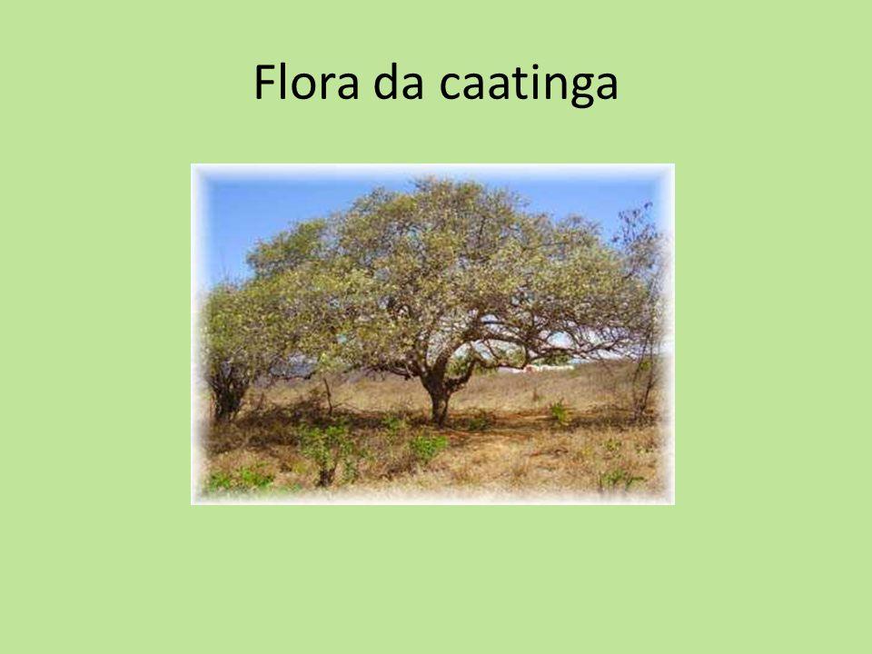 Flora da caatinga