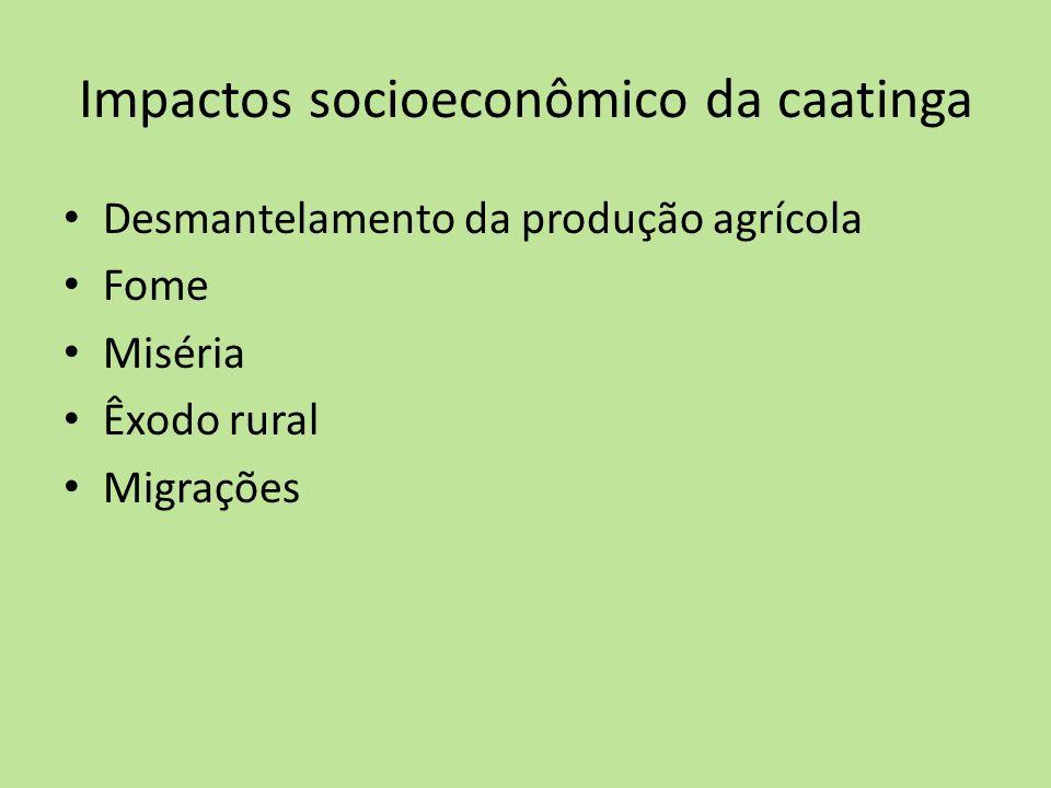 Impactos socioeconômico da caatinga Desmantelamento da produção agrícola Fome Miséria Êxodo rural Migrações