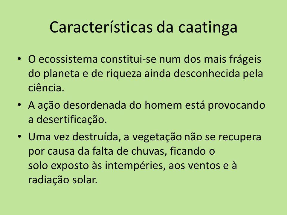 Características da caatinga O ecossistema constitui-se num dos mais frágeis do planeta e de riqueza ainda desconhecida pela ciência. A ação desordenad